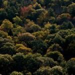 foliage-1-dsc_0045