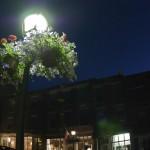 street-flowers-dsc_0179-41
